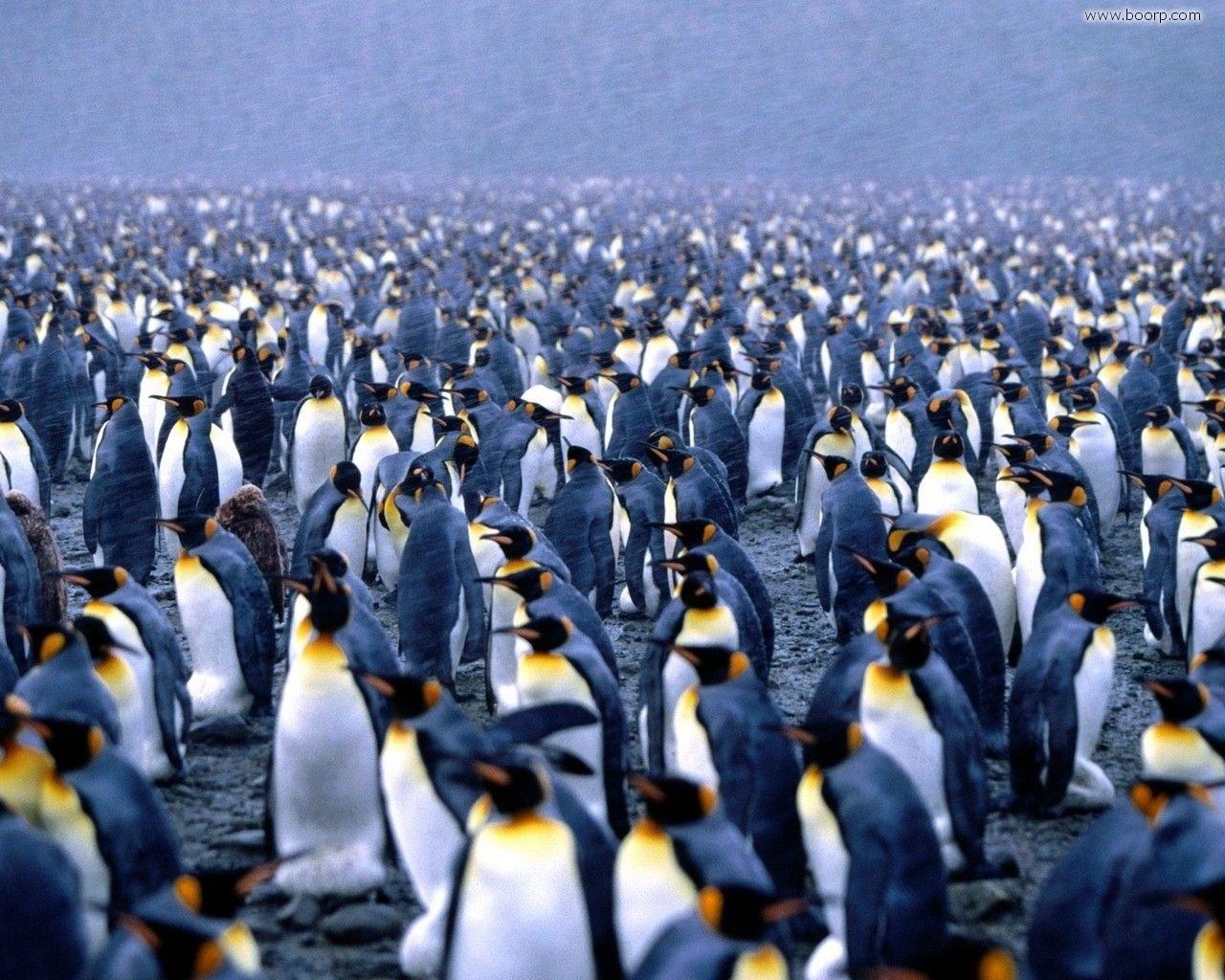 La strategia di sopravvivenza dei pinguini